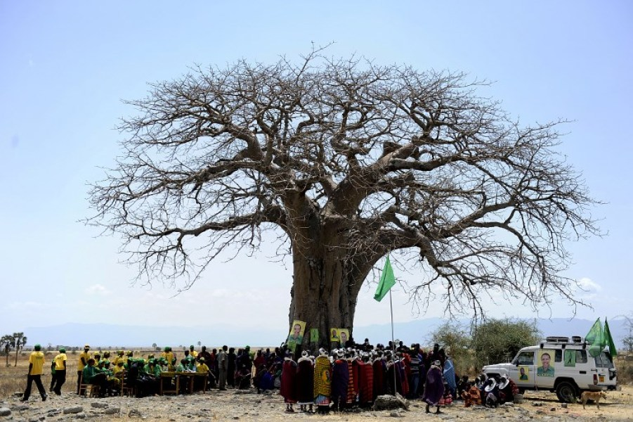 Un baobab en Tanzanie (photo d'illustration)