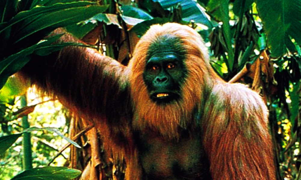 Un Singe Geant Du Type King Kong Disparu Faute D Adaptation