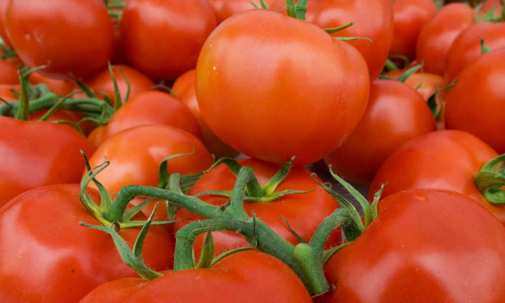 Des tomates (photo d'illustration).