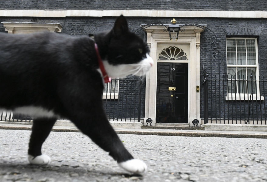 Palmerston, the Foreign & Commonwealth Office (FCO) cat stalks past 10 Downing Street in front of the waiting media in central London on June 9, 2017 after results in a snap general election show a hung parliament with Labour gains and the loss of the Conservative majority.