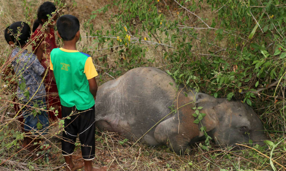 Sri Lankan children look at the body of an elephant at Cheddikulam, some 260 kilometres (162 miles) north of Colombo on August 17, 2016, after it was hit by a train. A passenger train hit and killed an elephant and three calves in northern Sri Lanka, the latest deadly accident involving the venerated animals. The herd was walking across a newly upgraded railway line that runs through a jungle area when the accident occurred.  STR / AFP