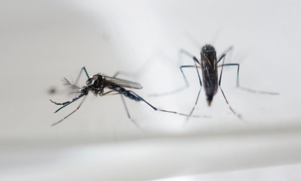 JO 2016 : 150 experts demandent un report à cause du virus Zika