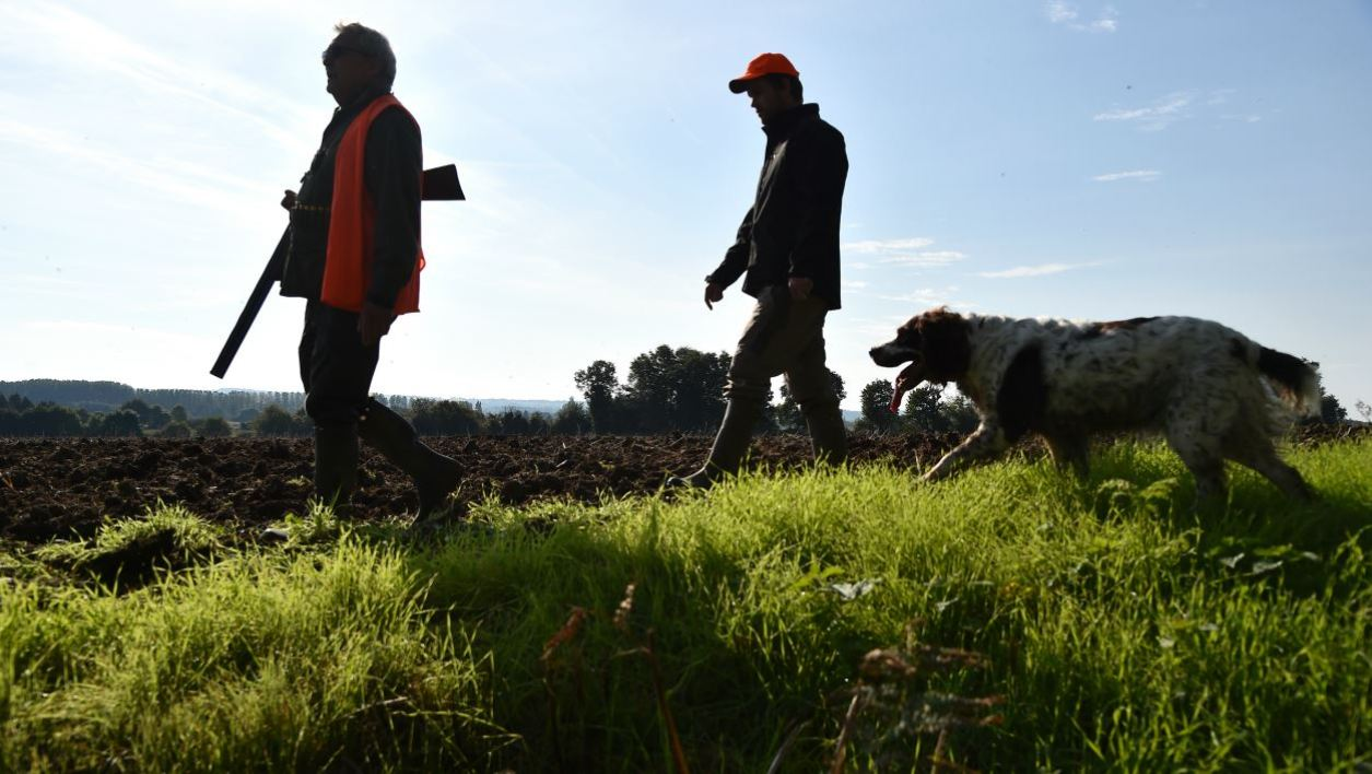 Hunters walk with their setter dog on the opening day of France's hunting season in the area, in Lamnay, northwestern France, on September 24, 2017.  JEAN-FRANCOIS MONIER / AFP
