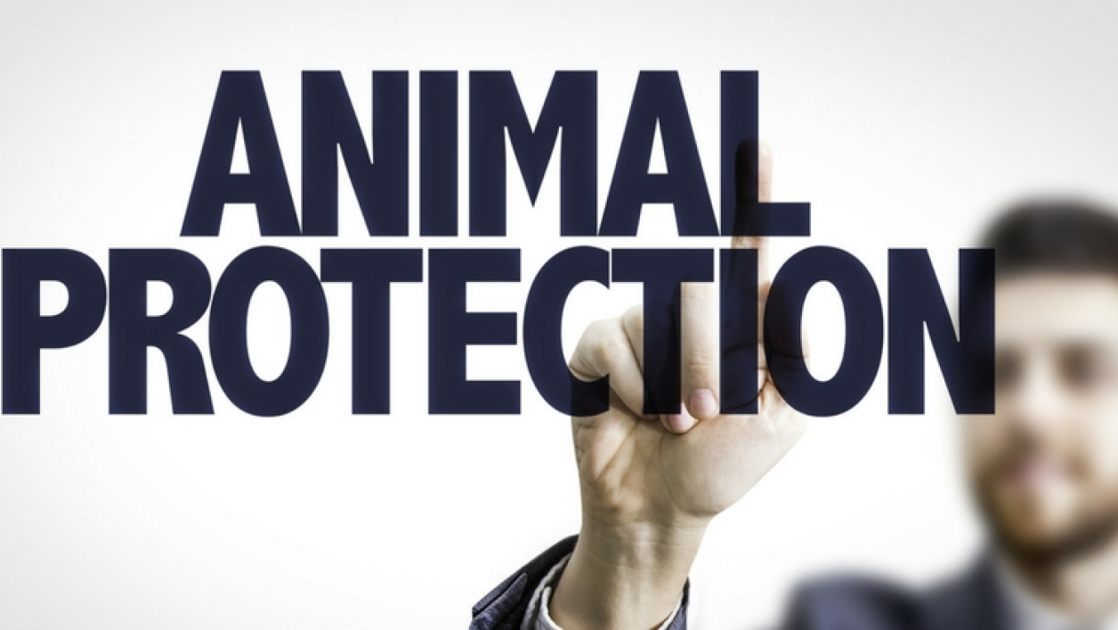 animal protection large fb 5a16cfda9afc0