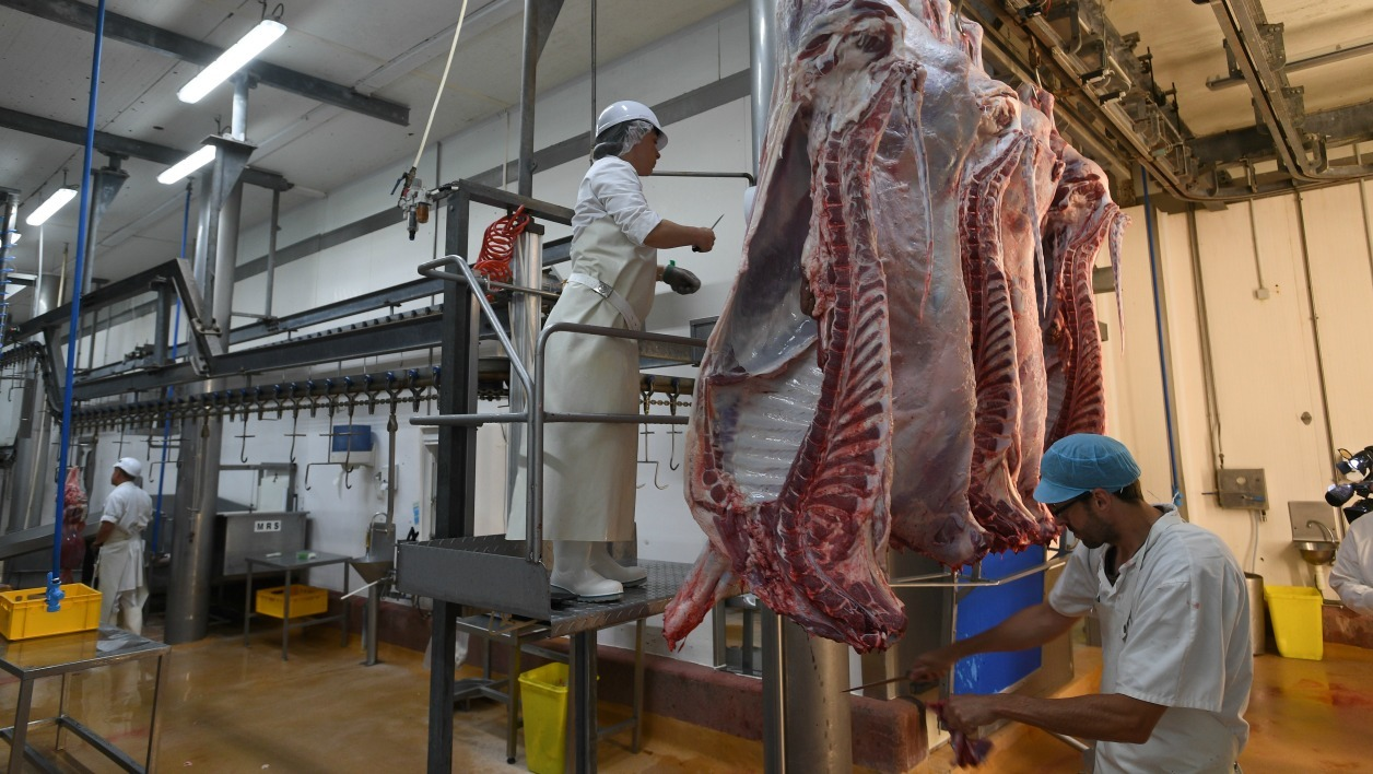 france-societe-abattoirs-camera-sondage