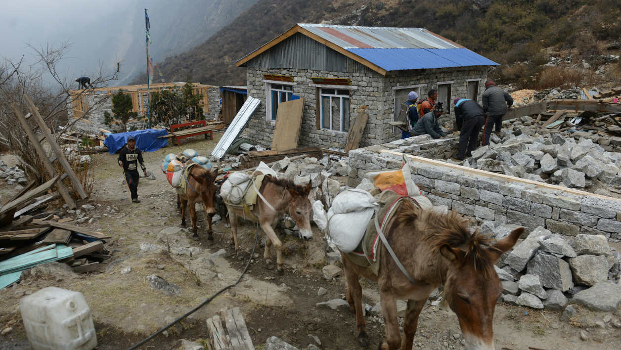In this photograph taken on April 7, 2016, Nepalese workers rebuild a tea-house as mules carry goods along a pathway in Langtang valley in Nepal's Rasuwa district. Langtang in Nepal is now little more than a graveyard. The once tranquil mountain village was obliterated last April when a massive earthquake shattered a glacier, raining tonnes of ice, snow and rock down into the valley below, where hundreds of bodies still lie buried.