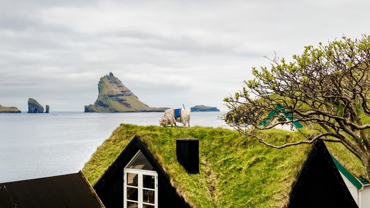 Sheep View, Street View, îles Féroé
