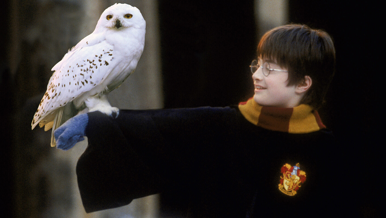 Harry Potter et sa chouette, Hedwige.