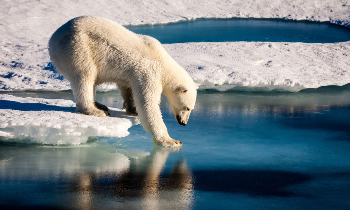 Un ours polaire teste la solidité de la glace arctique (photo d'illustration)