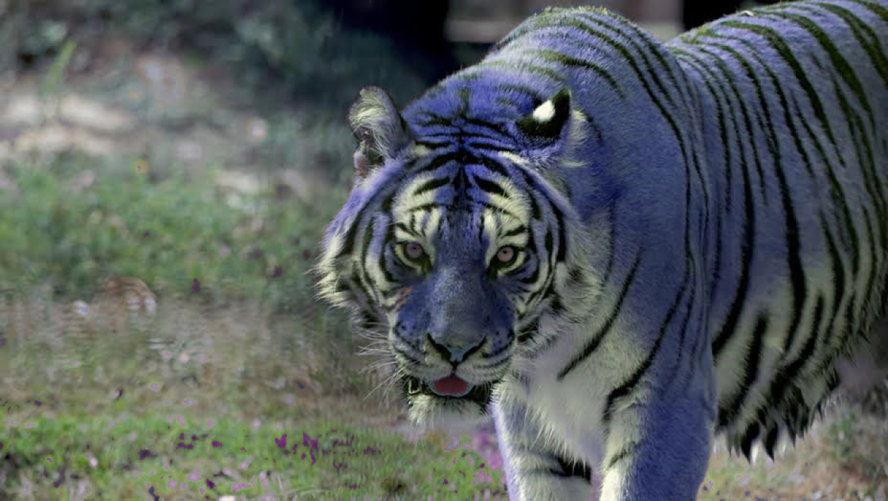"L'affaire du ""tigre bleu"" a causé le désarroi des lycéens (Photo d'illustration)"
