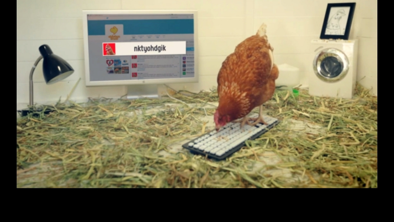 Betty, le poulet qui tweete, en course pour le Livre Guinness des records