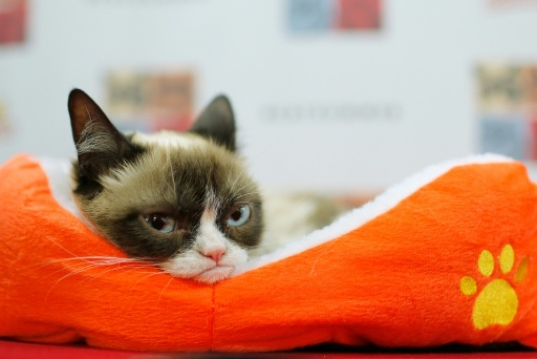 photo de Grumpy Cat prise le 15 juillet 2014