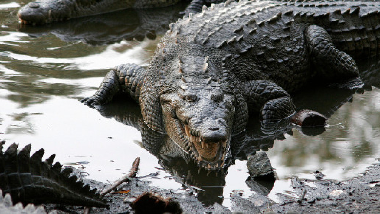 Un crocodile au Mexique (photo d'illustration)