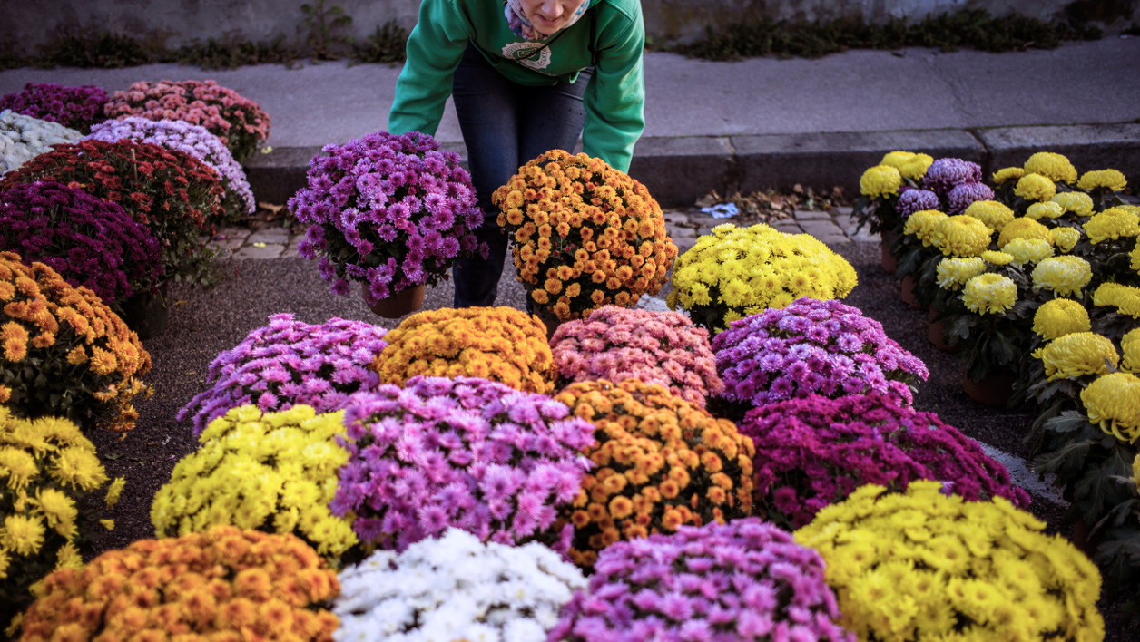 A girl carries a pot of chrysanthemums on October 31, 2013 into a cemetery in the central French city of Lyon, on the eve of All-Saints Day. In France, people place chrysanthemums on graves to mark All-Saints Day on November 1. AFP PHOTO / JEFF PACHOUD JEFF PACHOUD / AFP