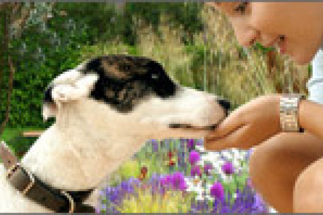 Rencontres canines