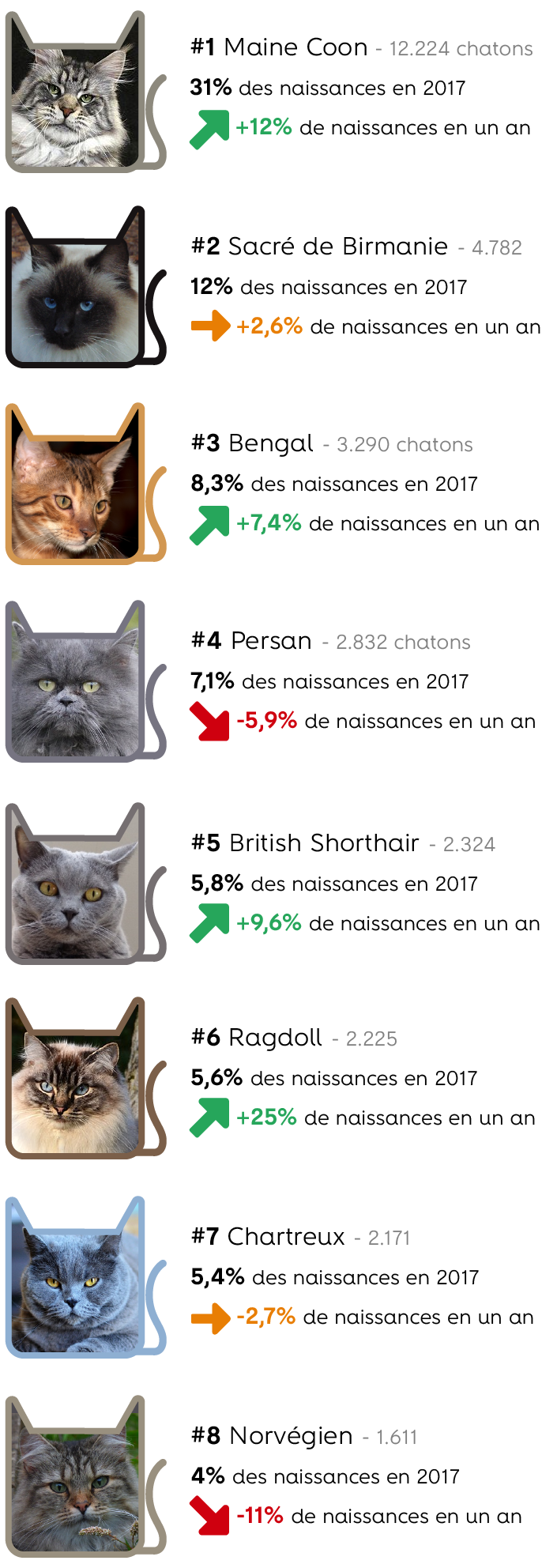 infographie chat race