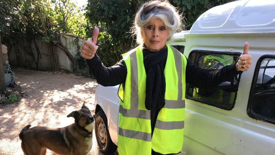 Image result for Brigitte Bardot, yellow vest