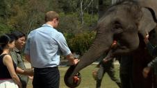 Chine : le prince William rencontre des éléphants
